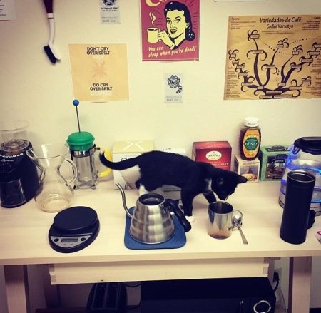 Sir Dave, Barista Cat